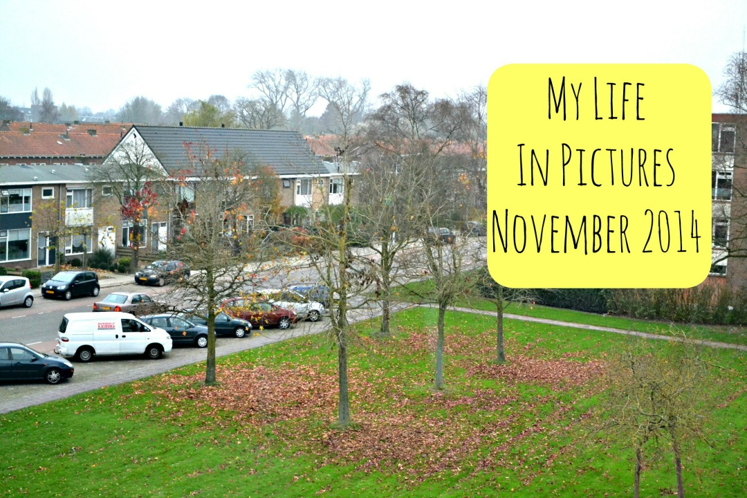 My Life In Pictures November 2014