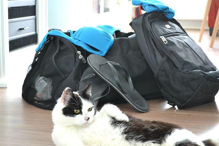 Tips voor als je op vakantie wilt en een huisdier hebt