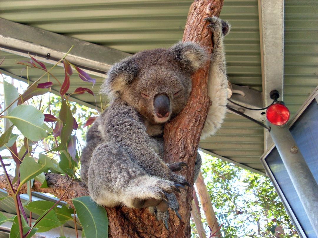 Australische dieren