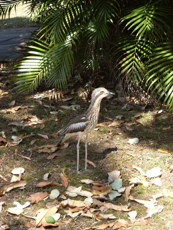 Australië blog 4: Airlie Beach