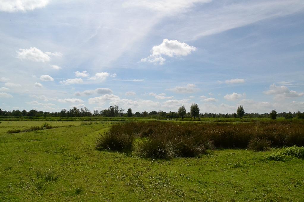 Alde-feanen-landschap